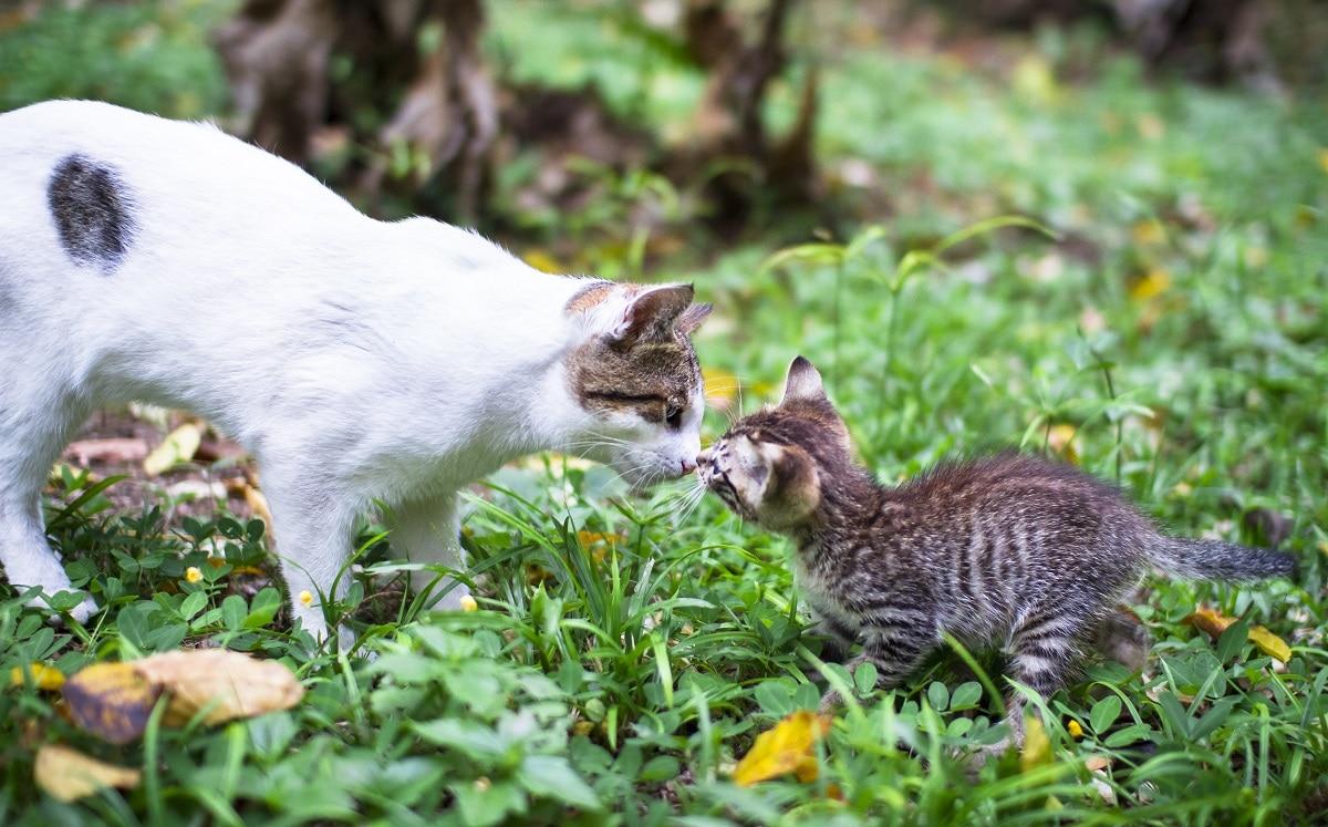 dois gatos em adaptação